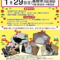 1/29(日)名古屋市八事のお寺で里親会開催