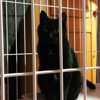 お茶目な美猫の黒猫ちゃんです!