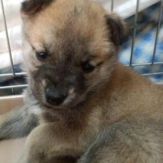 生後約1ヶ月!可愛い子犬②♬