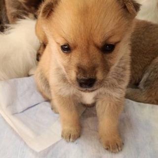 生後約1ヶ月!可愛い子犬③♬