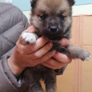 生後約1ヶ月!可愛い子犬①♬