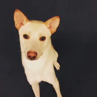1歳の犬の新しい家族募集