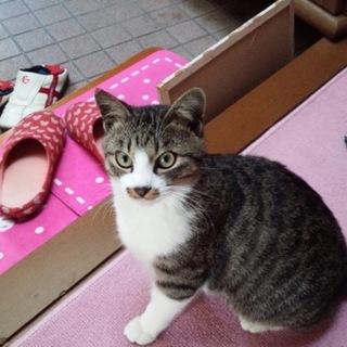 猫♂ 生後7ヶ月
