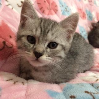 まん丸フワフワ子猫ちゃんです