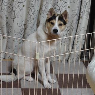 ジャンプが得意なまゆげ犬!家では大人しいです♥