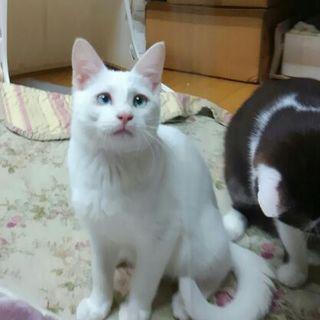 オドオドしてる白猫