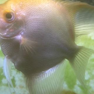 飼育道具セット 熱帯魚・金魚里親募集