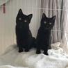 ツヤツヤ黒猫姉妹