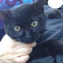 デンデン・人懐こい超可愛い黒猫くん