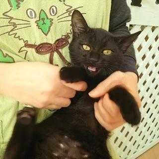 だっこ大好き黒猫さん 11か月ざくろ 女の子