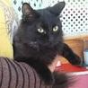 ふわふわの黒猫さん りんちゃん 5か月の女の子 サムネイル2
