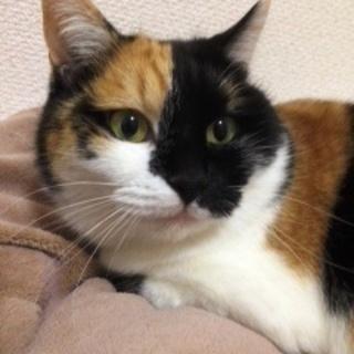みーこちゃん  きれいな三毛猫です