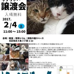 北海道拓北 猫のちっちゃい譲渡会