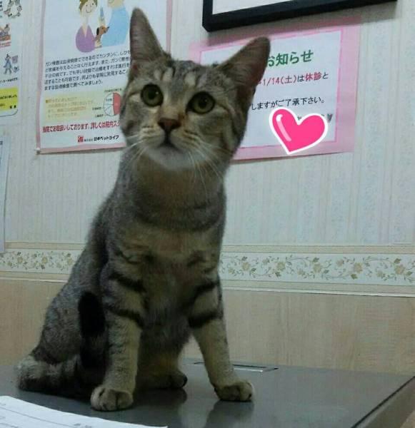 「【一旦募集停止】【仔猫】...」三重県 - 猫の里親募集(144663)