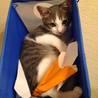 生後5ヶ月のオス猫です