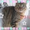 まだ若い可愛い猫ちゃんです!>_<