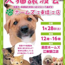 島忠ホームズ 江東猿江店 犬猫譲渡会