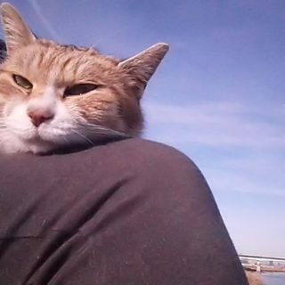 ゴミだらけの河川敷で暮らす母猫『ルルちゃん』