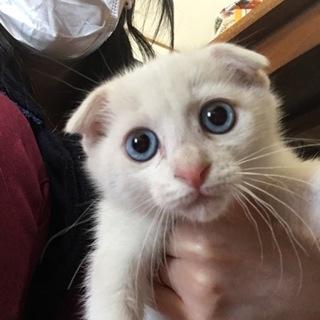 かわいいブルーアイ白猫ちゃん♡