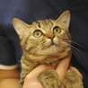 熊本地震の被災猫。たくさんの猫が助けを待っています サムネイル3