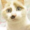 熊本地震の被災猫。たくさんの猫が助けを待っています