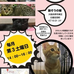 第四回☆猫のおうちさがし(里親会) サムネイル1