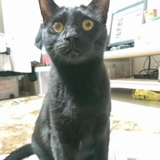 黒猫ウニおくん