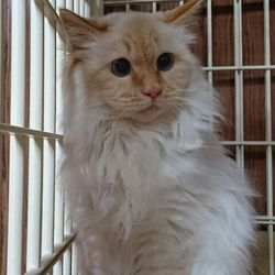 三重県桑名市2月12日 第65回リトルパウエイド猫の譲渡会