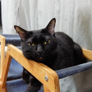 多頭飼い崩壊現場から保護ツンデレ黒猫ちゃん里親決定
