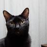 多頭飼い崩壊現場から保護ツンデレ黒猫ちゃん里親決定 サムネイル4
