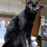 多頭飼い崩壊現場から保護ツンデレ黒猫ちゃん里親決定 サムネイル5