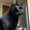 多頭飼い崩壊現場から保護ツンデレ黒猫ちゃん里親決定 サムネイル6