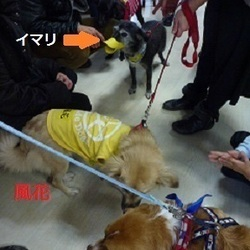 「犬の合宿所in高槻」の里親募集会 サムネイル3