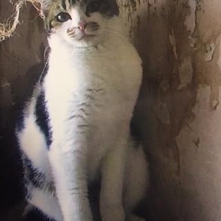 美猫ナタリーちゃん9ヶ月