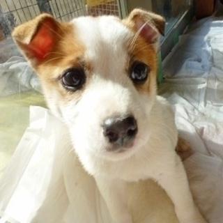 天真爛漫、明るく元気な子犬のミラ君