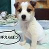 天真爛漫、明るく元気な子犬のミラ君 サムネイル2