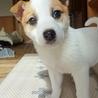 天真爛漫、明るく元気な子犬のミラ君 サムネイル3
