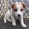 天真爛漫、明るく元気な子犬のミラ君 サムネイル5