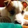 天真爛漫、明るく元気な子犬のミラ君 サムネイル6