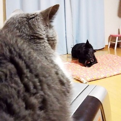 ほどよい距離♪犬と猫