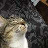 三毛子猫♀ サムネイル2