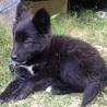可愛いこぐまちゃん!賢く性格の良い子犬チナセちゃん サムネイル3