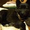 可愛いこぐまちゃん!賢く性格の良い子犬チナセちゃん サムネイル4