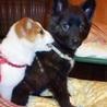 可愛いこぐまちゃん!賢く性格の良い子犬チナセちゃん サムネイル6