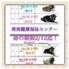 生後1ヶ月の子犬達12匹!命の期限2/12迄です!