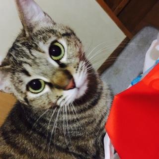 美人茶トラちゃんとまだらちゃんとイケメン猫くん