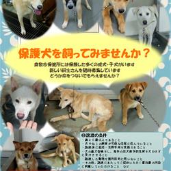 倉敷市保健所 収容犬譲渡会