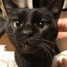 人懐こい黒猫ちゃんの里親さん募集です!