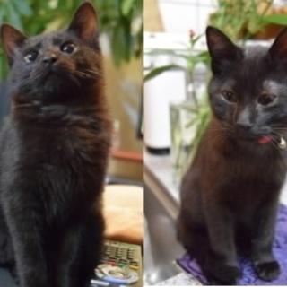 2にゃん一緒のご応募です。可愛い黒猫さん
