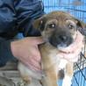 緊急募集!!1ヶ月位の兄妹子犬です。